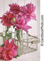 Closeup of peony flowers in bottles