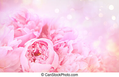 Closeup of peony flowers on soft pastel background