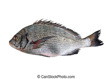 crucian carp on white background - closeup of pictures,...