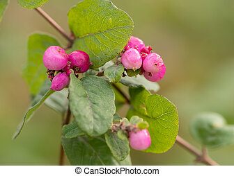 Closeup of pink berries on a bush in autumn