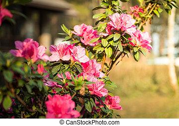 closeup of pink flower in garden