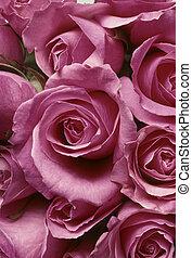 Closeup of pink roses in a tight arrangment BFS20929214