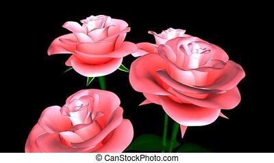 Closeup of Pink Roses