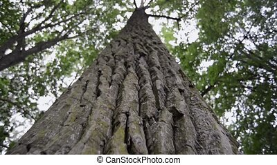 powerful tree bark - closeup of powerful tree bark, camera...