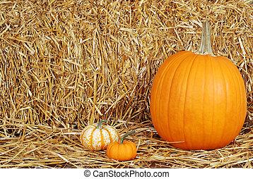 pumpkins on straw - closeup of pumpkins on straw