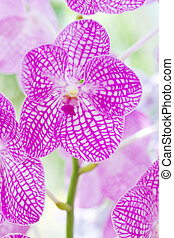 Closeup of Purple orchids