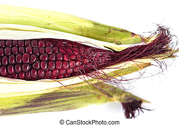 Closeup of Purple Waxy Corn isolated on white background