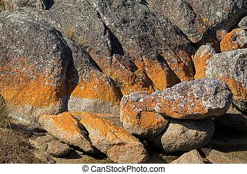 Closeup of red orange lichen growing on granite rocks...