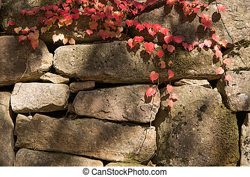 red vine on a stone wall