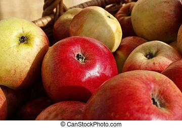 Closeup of ripe apples in a basket