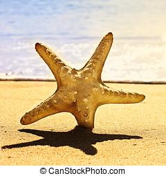 sea star on the beach
