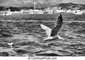 Closeup of seagull flying over the sea of Sardinia, Italy
