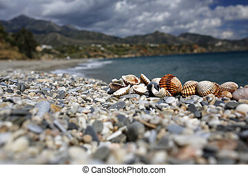 closeup of seashells on the beautiful summer beach