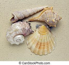 closeup of shells on handmade paper background