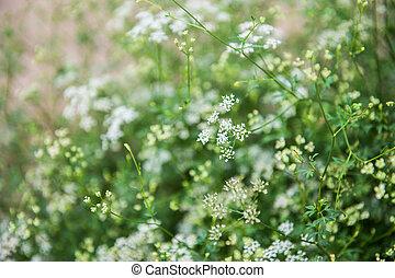 Closeup of small flower in a garden