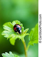 small ladybug sitting at green leaf