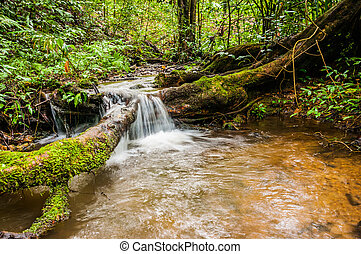 closeup of small waterfall in the forest, natural park from Thai