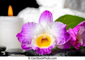 closeup of spa still life purple orchid dendrobium, candle  and