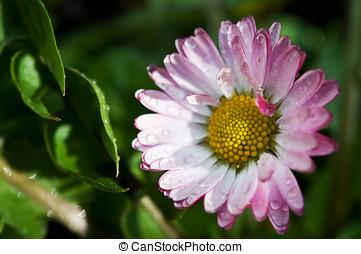 closeup of spring flower