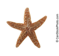 Closeup of Starfish Isolated on White Background