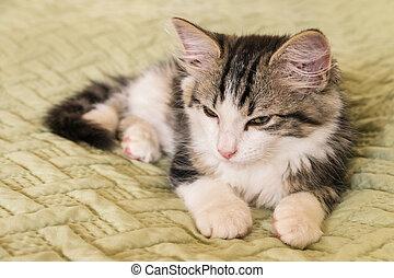 tabby and white cat lying on green duvet