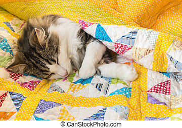 tabby cat resting in colourful quilt cover
