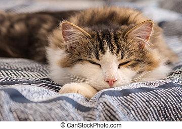tabby cat sleeping on blue duvet