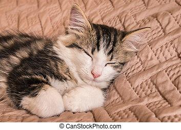tabby cat sleeping on pale brown duvet