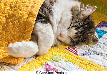 tabby cat sleeping under yellow quilt cover
