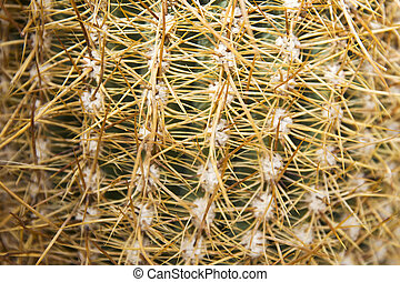 Closeup of the cactus