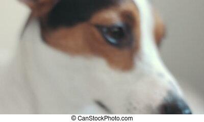 Closeup of the dog muzzle