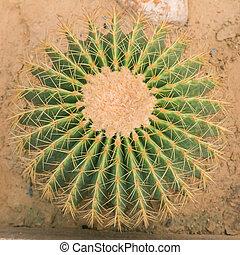 Closeup of the green cactus in the garden