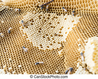 Closeup of the small honeycomb
