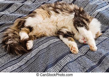 tired tabby cat resting on blue duvet cover