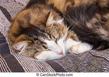 tired tabby kitten relaxing on blue duvet