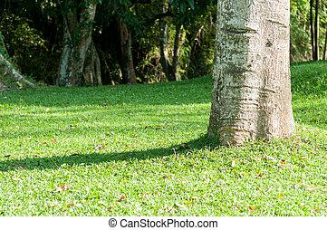 Closeup of tree in garden