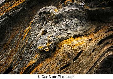 Closeup of tree trunk