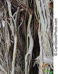 Closeup of tree trunk texture