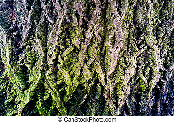 Closeup of tree trunk with green moss, background