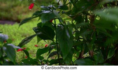 Closeup of tropical flowers. Beautiful tropical background. Red and green background. Tropical background. Low DOF. 4K.