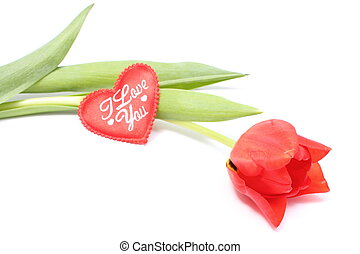Closeup of tulip with red heart on white background