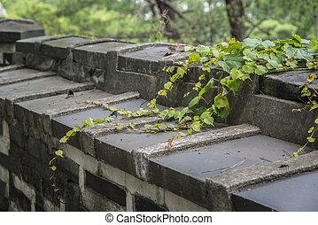 closeup of vine on a wall