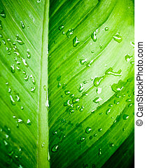 Closeup of water drops on fresh green leaf