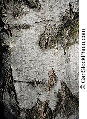 Closeup of white birch bark