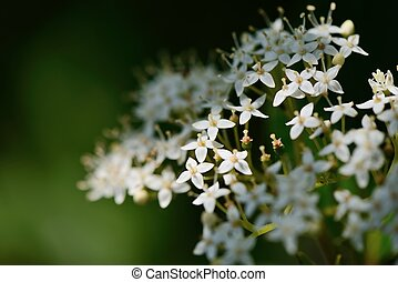 Closeup of white small flowers