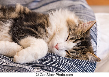 white tabby cat sleeping in bed