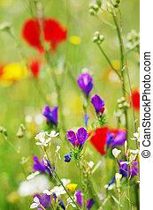 closeup of wild flowers in field