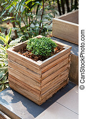 Closeup of wooden pot with green plant in garden