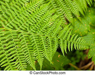 Closeup of Woodland Plants on the Forest Floor