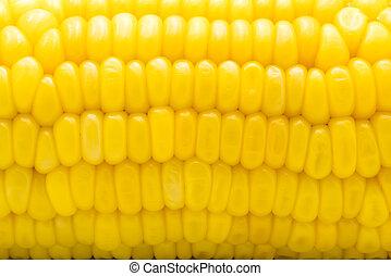Closeup of yellow corn cob